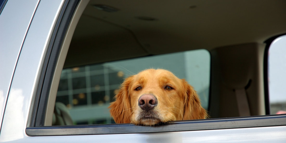 Tips for Fun Road Trips with Your Furry Friends